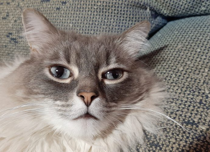 Cómo evitar que los gatos arañen los muebles