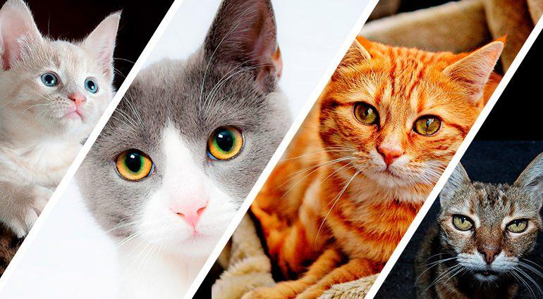 Edad de un gato en años humanos