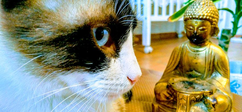 El misticismo de los gatos