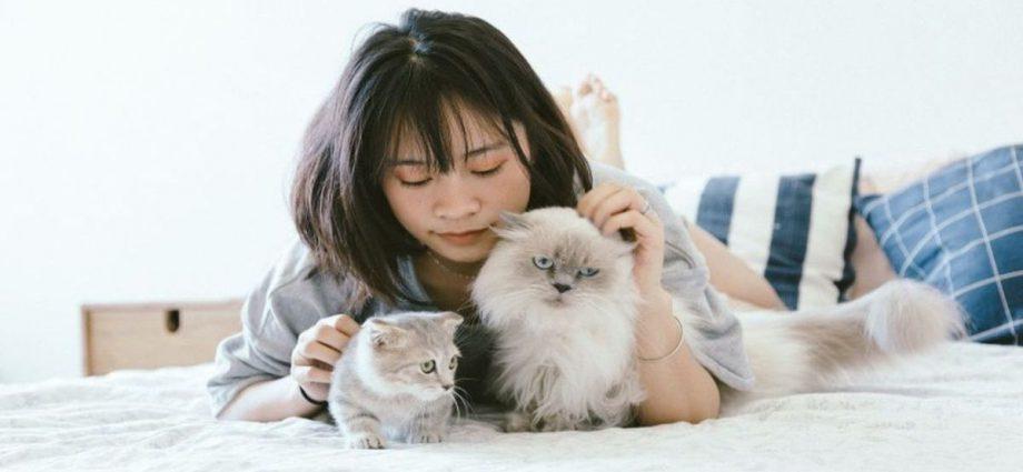 La terapia con gatos