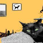 ¿Por qué los gatos sueltan tantos pelos?