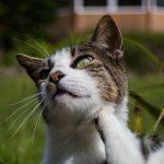 Parásitos en los gatos