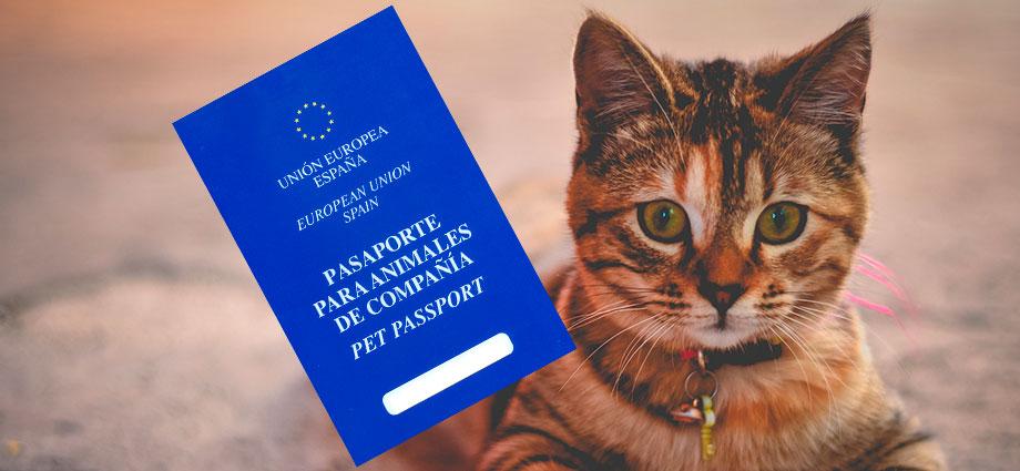 Pasaporte para gatos