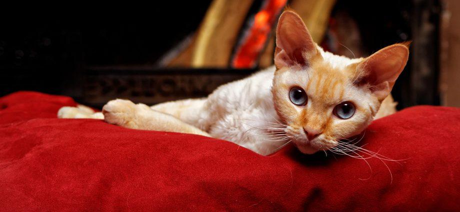 Por qué tener un gato según el Feng Shui