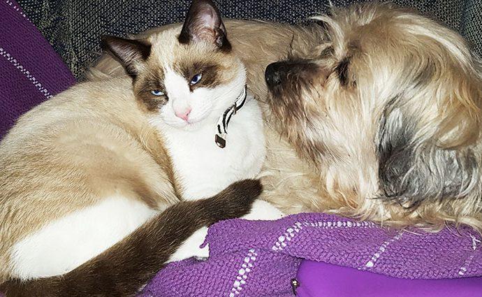 La relación entre perros y gatos